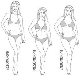 Understanding The Different Body Types
