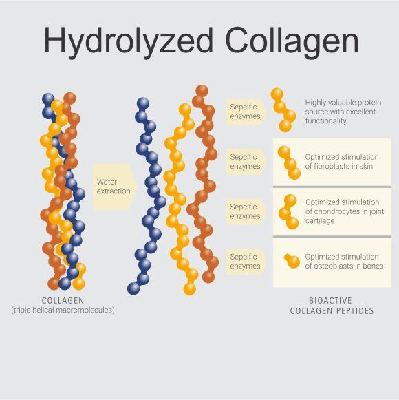 Collagen Hydrolyzing Illustration Sqr